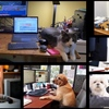 A fun day at the paw-ffice